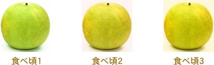 二十世紀梨の食べ頃
