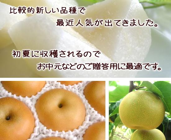 「愛甘水梨」暑い夏だからこそ冷やして食べよう!