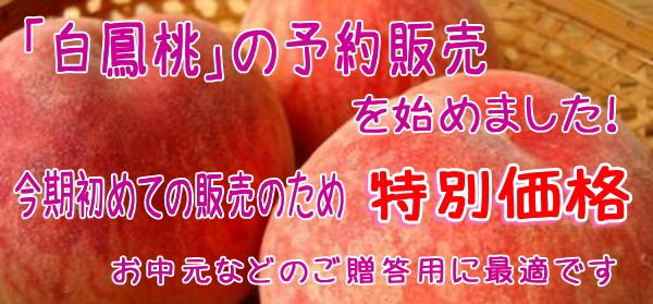 白鳳桃の販売、通販